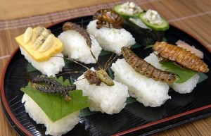 insect_food101