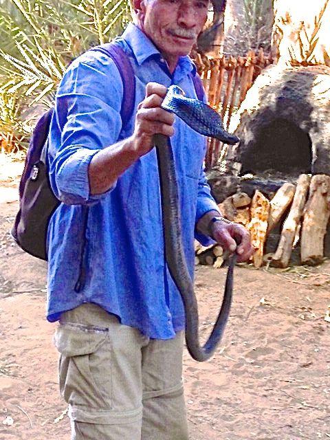 snake wrangler
